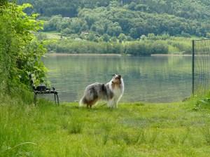 Dat Rettich an unserem schmalen Zugang zum See