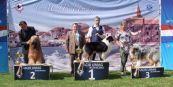 FCI Gruppe 1 in Umag 2013: Amourette vollendet den Kroatischen Champion, gewinnt das BOB und darf auf's Treppchen in der FCI-Gruppe