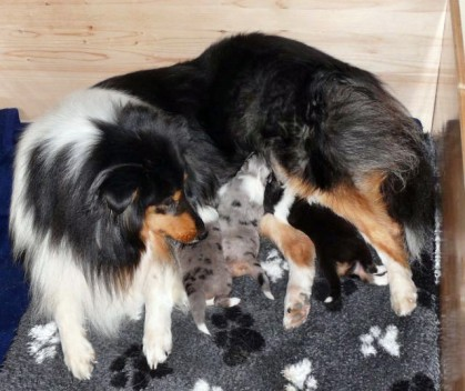 Velvet und ihre Kinder