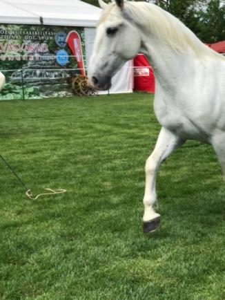 Pferd4